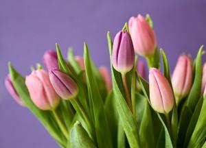 tulips-320151_960_720