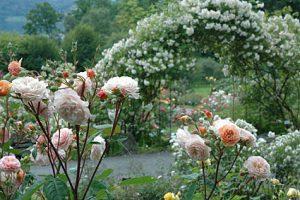 blommor-som-doftar-riktigt-gott-2